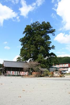 kasimonosugi2.jpg
