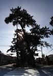 mihonomatubara_p5.jpg