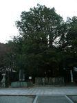 naginorouju5.jpg